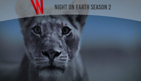 night on earth season 2 release date